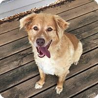 Adopt A Pet :: Bandit - Elk River, MN