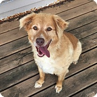 Adopt A Pet :: Bandit - Minneapolis, MN