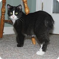 Adopt A Pet :: Jigglypuff - Fairfax, VA