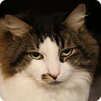 Adopt A Pet :: Mischief - Sarasota, FL