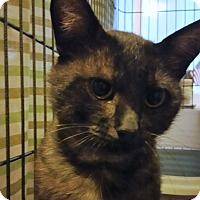Adopt A Pet :: Francis - Kirkland, WA