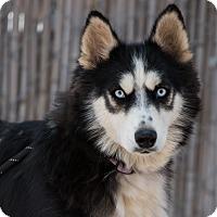 Adopt A Pet :: Breezy - Cedar Crest, NM