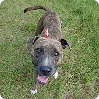 Terrier (Unknown Type, Medium) Mix Dog for adoption in Umatilla, Florida - Pickles