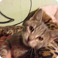 Adopt A Pet :: Laruen - Bridgeton, MO