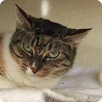 Adopt A Pet :: Greta Garbo - Fort Collins, CO