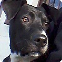 Adopt A Pet :: GLENN - Lyndhurst, NJ