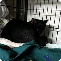 Adopt A Pet :: Onyx - North Kingstown, RI