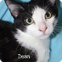 Adopt A Pet :: Dean - Foothill Ranch, CA