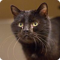 Adopt A Pet :: Brewer - Grayslake, IL