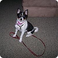 Adopt A Pet :: Scooter - Chewelah, WA
