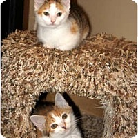 Adopt A Pet :: Belle - Xenia, OH