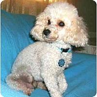 Adopt A Pet :: Susie Q - Mooy, AL