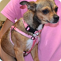 Adopt A Pet :: Sophie - Simi Valley, CA