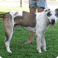 Adopt A Pet :: Baloo - Cokato, MN