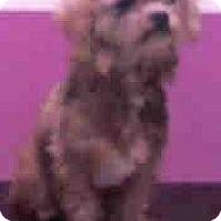 Adopt A Pet :: Polo-Adoption Pending - Boulder, CO