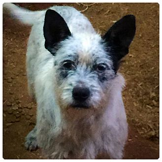 Terrier (Unknown Type, Medium) Mix Dog for adoption in Powder Springs, Georgia - Coby