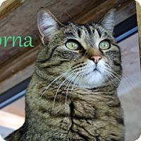Adopt A Pet :: Lorna - Hamilton, MT