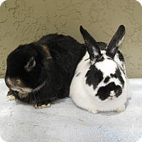 Adopt A Pet :: Ralph & Morgan - Bonita, CA