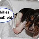 Adopt A Pet :: Penelope's Achilles