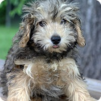 Adopt A Pet :: Dylan - Waldorf, MD