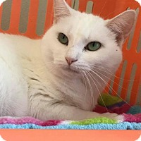 Domestic Shorthair Cat for adoption in Cumberland, Maine - Zinnia