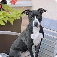 Adopt A Pet :: Davetta - Marietta, GA