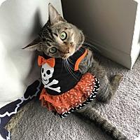 Adopt A Pet :: Angelica - Carlisle, PA