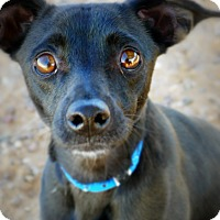 Adopt A Pet :: Freefall - Casa Grande, AZ