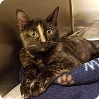 Adopt A Pet :: Joy - Windsor, VA