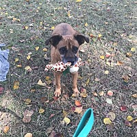 Terrier (Unknown Type, Medium) Mix Dog for adoption in Jackson, Mississippi - Angel