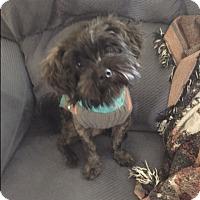 Adopt A Pet :: TOBY in Rhode Island - West Warwick, RI
