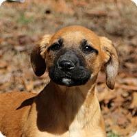 Adopt A Pet :: Cabbie - Glastonbury, CT