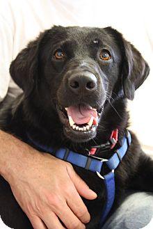 Labrador Retriever Mix Dog for adoption in Homewood, Alabama - Emma