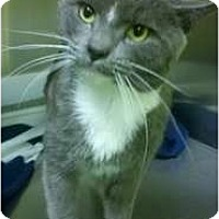 Adopt A Pet :: Titan Reed - Richboro, PA