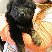 Adopt A Pet :: Woody - Knoxville, TN