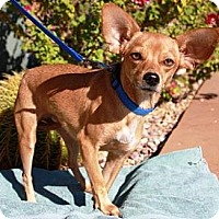 Adopt A Pet :: Buddy Ray - Gilbert, AZ