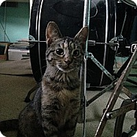 Adopt A Pet :: Jodi - Rohnert Park, CA