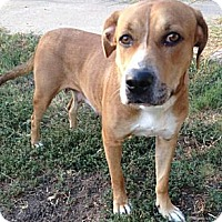 Adopt A Pet :: Canela Cleopatra - Pflugerville, TX