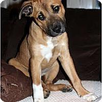 Adopt A Pet :: Seven - Rowlett, TX