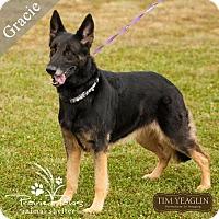 Adopt A Pet :: Gracie2 - Denver, CO