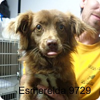 Adopt A Pet :: Esmerelda - baltimore, MD