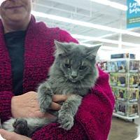 Adopt A Pet :: Lionel - Fairborn, OH