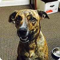 Adopt A Pet :: Paige - Austin, TX