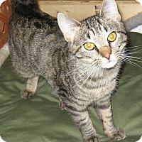 Adopt A Pet :: Tobie - brewerton, NY