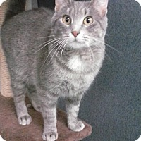 Adopt A Pet :: Sabannah - Fort Dodge, IA