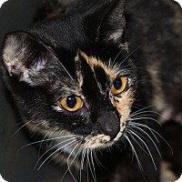 Adopt A Pet :: Luna - Brockton, MA