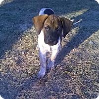 Adopt A Pet :: Diesel - Winchester, VA