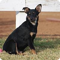 Adopt A Pet :: Harlann - San Diego, CA