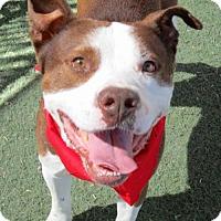Adopt A Pet :: MARCHANT - Chandler, AZ