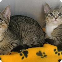 Adopt A Pet :: Kittens - Brockton, MA